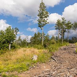 43.48060, -71.15279. Birch Ridge location E. Facing east. New Durham, New Hampshire.