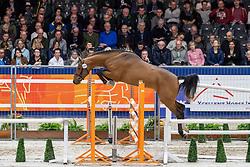 200, Mister Gold GPH<br /> KWPN hengstenkeuring - 's Hertogenbosch 2020<br /> © Hippo Foto - Dirk Caremans<br /> 29/01/2020