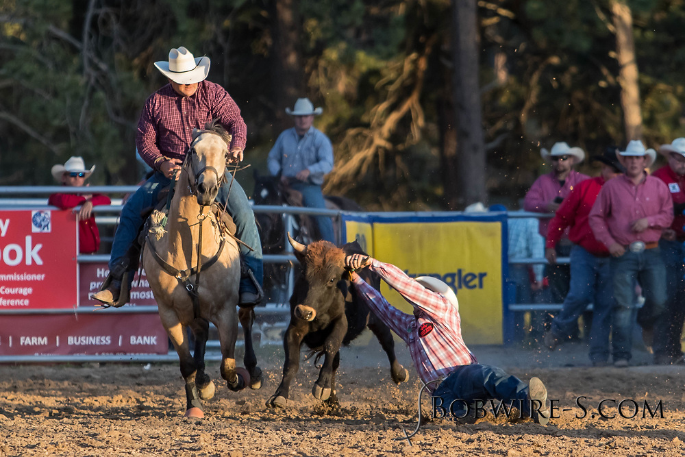 Steer wrestler Nick Guy makes his run during the second performance of the Elizabeth Stampede on Saturday, June 2, 2018.