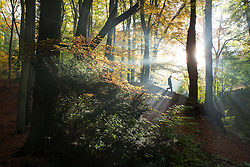 © Licensed to London News Pictures 31/10/2016, Cheltenham, UK. People walking amongst the richly coloured autumnal trees on Leckhampton Hill. Photo Credit : Stephen Shepherd/LNP