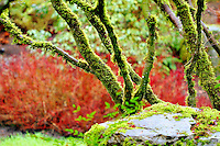 Green moss and red grasses