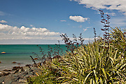 Riverton, flax at beach, New Zealand