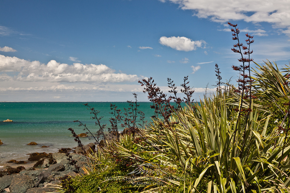 Riverton, flax at beach, New Zealand