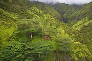 Twin waterfall, Source of Hanlei stream, Hanalei Valley, Kauai, Hawaii