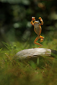 Flying Frog Dancing