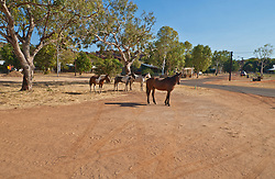 Horses wander the streets of Looma Aboriginal community.