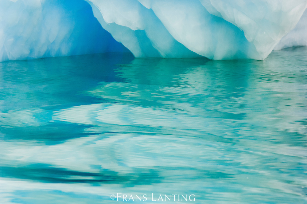 Iceberg and water reflections, Paradise Bay, Antarctica