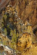 Trees and canyon walls, Grand Canyon of Yellowstone, Yellowstone National Park, Wyoming/Montana.