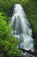 Fairy Falls, Columbia River Gorge National Scenic Area, Oregon