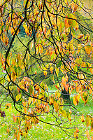 Backlit dogwood leaves and branches in autumn&#xA;<br />