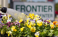 Douglas Slaymaker, of Marion, works on watering the flowers at Frontier Garden Center, 1941 Blairs Ferry Road NE, in Cedar Rapids, on Thursday, September 8, 2011.