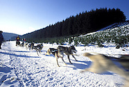 Schlittenhunderennen :: Dog Sledding