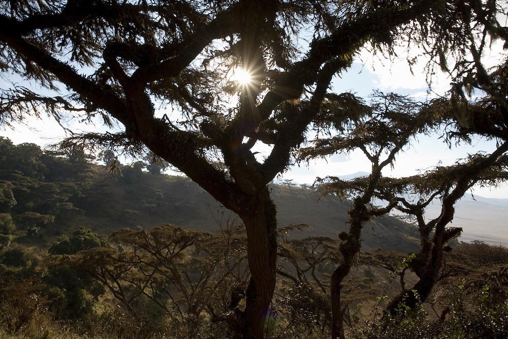 Africa, Tanzania, Ngorongoro Conservation Area, Rainforest along volcano slopes