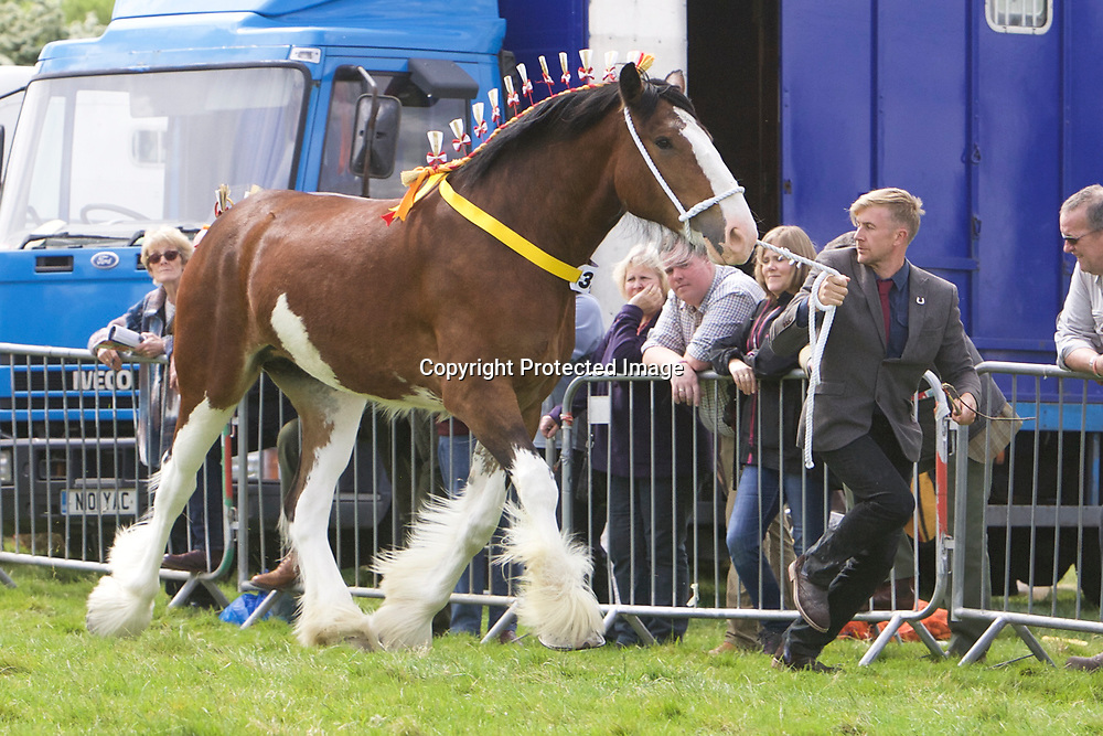 Robert Bedford's HARTCLIFF RIHANNA<br />