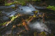 Headwaters of Jack Creek near Camp Sherman, OR.