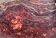 Grand Canyon Supergroup stromatolite pattern, on the fascinating Trail of Time interpretive exhibit on the South Rim of Grand Canyon National Park, Arizona, USA. Starting west of Yavapai Geology Museum, walk for 1.3 miles on the paved trail backward in time from today toward the oldest rock in Grand Canyon, Elves Chasm gneiss, 1.840 billion years old. Or begin east of Verkamp's Visitor Center, walking forward in time toward the youngest rock in the Grand Canyon, Kaibab Limestone, 270 million years old. Starting at least 5 to 17 million years ago, erosion by the Colorado River has exposed a column of distinctive rock layers, which date back nearly two billion years at the base of Grand Canyon. While the Colorado Plateau was uplifted by tectonic forces, the Colorado River and tributaries carved Grand Canyon 6000 feet deep, 277 miles  long and up to 18 miles wide.