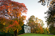 A cotinus tree with bright red foliage in autumn next to the temple in Kew Gardens, Kew, London, UK