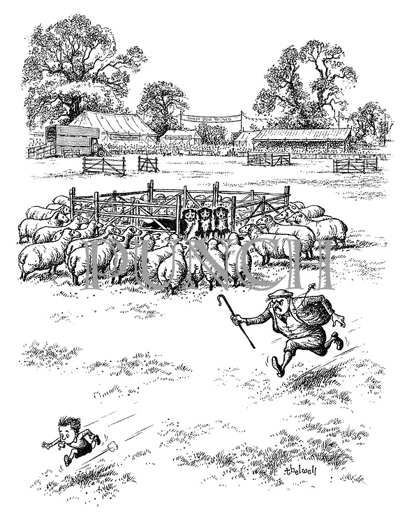 (A farmer participating in sheep dog trials, runs after a little boy with a whistle who has managed to trap the sheep dogs in a pen surrounded by sheep)