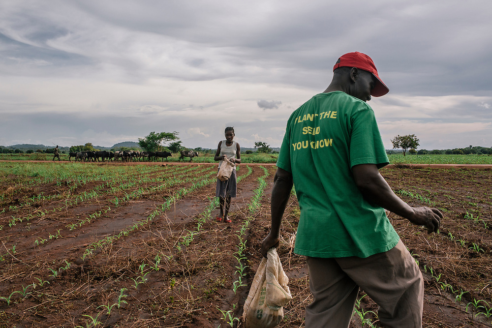 Harrison Zakara, joined by his daughter Dumisile, 14, places fertilizer on crops from soybeans to maize, at his demo plot near Chnini Agriculture Camp in Zambia. Zakara, an agriculture dealer, has also opened up a store next to his house to sell herbicides and certified seeds to farmers in addition to managing his demo plot. Zakara was trained by Profit +, along with 29 others, so he has the proper knowledge on the products and can advise other farmers in best practices. With the extra income he earns from the store and higher yielding crops, Zakara is able to take care of all 17 family members that he lives with, including his grandchildren.