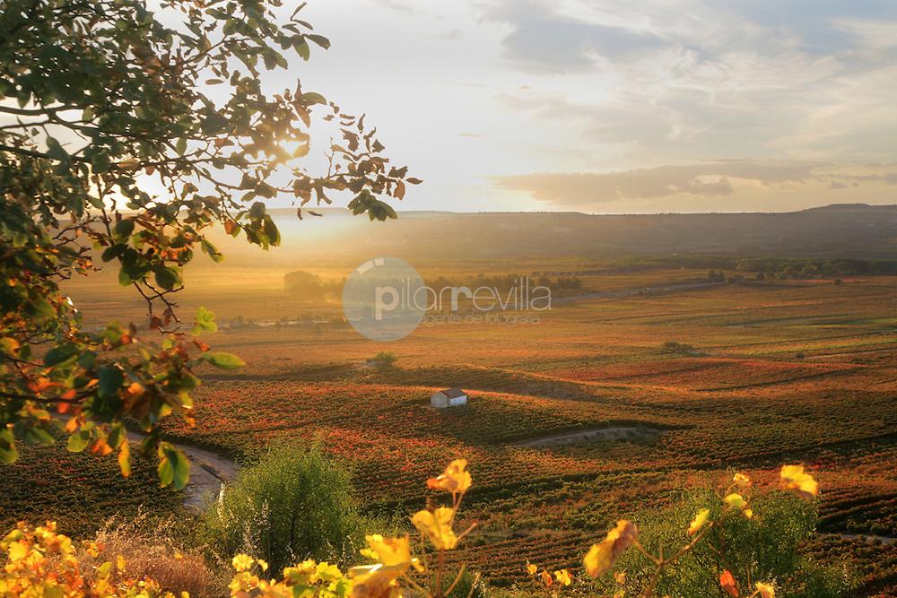 Paisaje otoñal. La Rioja ©Daniel Acevedo / PILAR REVILLA