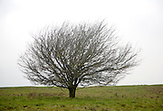 Bare leafless branches of small tree bush in winter, UK