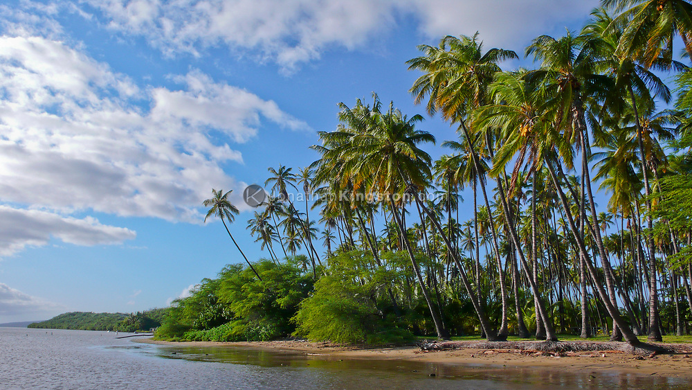 A view from the water of Kiowea Park and the Kapuaiwa Coconut Grove, Molokai, Hawaii.  Kapuaiwa Coconut Grove is a tourist attraction boasting 1000 coconut trees planted in 1863 by King Kamehameha.