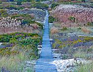 Boardwalk through dunes, Amagansett, The Atlantic Double Dunes Preserve-The Nature Conservancy, Atlantic Ocean, Long  Island, New York