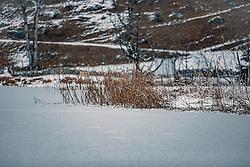 THEMENBILD - Seeufer mit Schilf des zugefrorenen Klammsee, aufgenommen am 04. Jänner 2020 in Kaprun, Oesterreich // Lake shore with reeds of the frozen gorge lake, in Kaprun, Austria on 2020/01/04. EXPA Pictures © 2020, PhotoCredit: EXPA/Stefanie Oberhauser