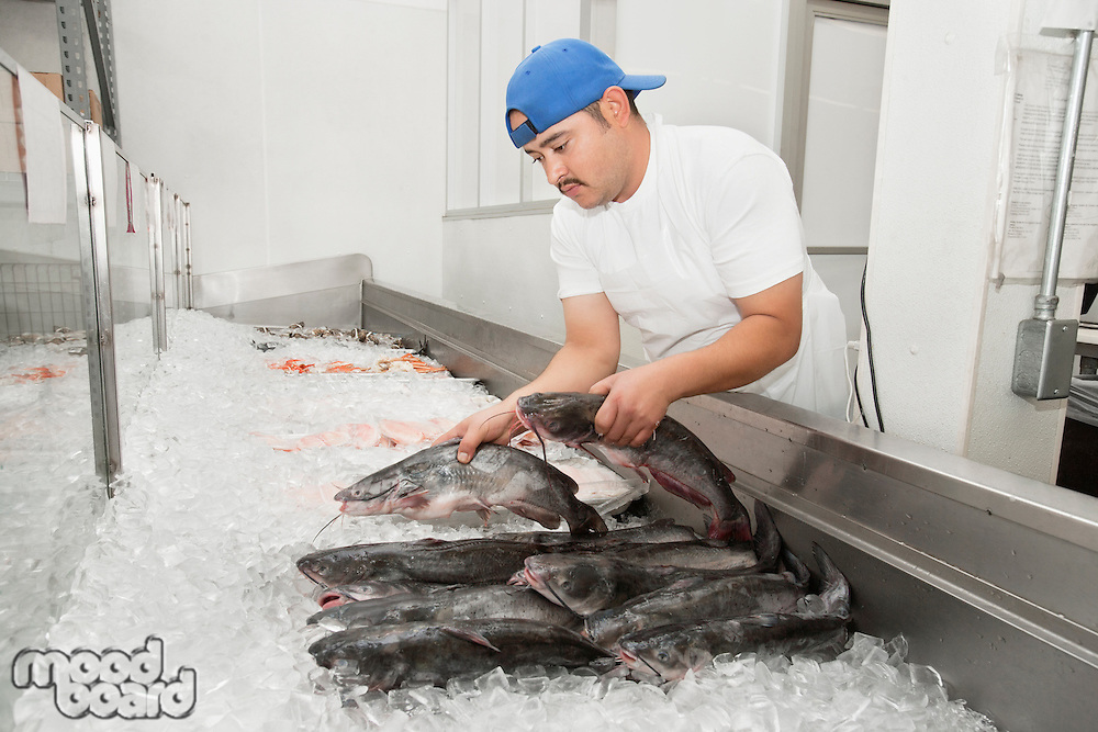 Young fishmonger arranging fish in ice at fish market