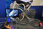 Israel, Haifa, MadaTech The Israel national Museum of Science The Robotic World exhibition, Robot Zoo, Giant Squid Robot