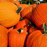 Stack of Large, Orange Pumpkins at Vegetable Stand in Rockford, Minnesota