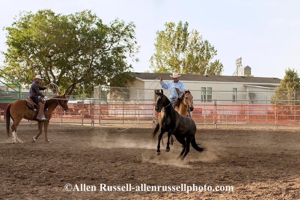Will James Roundup, Ranch Rodeo, Wild Horse Roping, KC Verhelst, Ed Verhelst, Hardin, Montana, MODEL RELEASED, PROPERTY RELEASED riders & horses only.