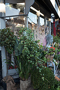 Henley, Oxfordshire. England General Views Henley Town [Florist front of sharp display] Thursday  01/12/2016<br /> © Peter SPURRIER<br /> LEICA CAMERA AG  LEICA Q (Typ 116)  f1.7  1/400sec  35mm  9.5MB