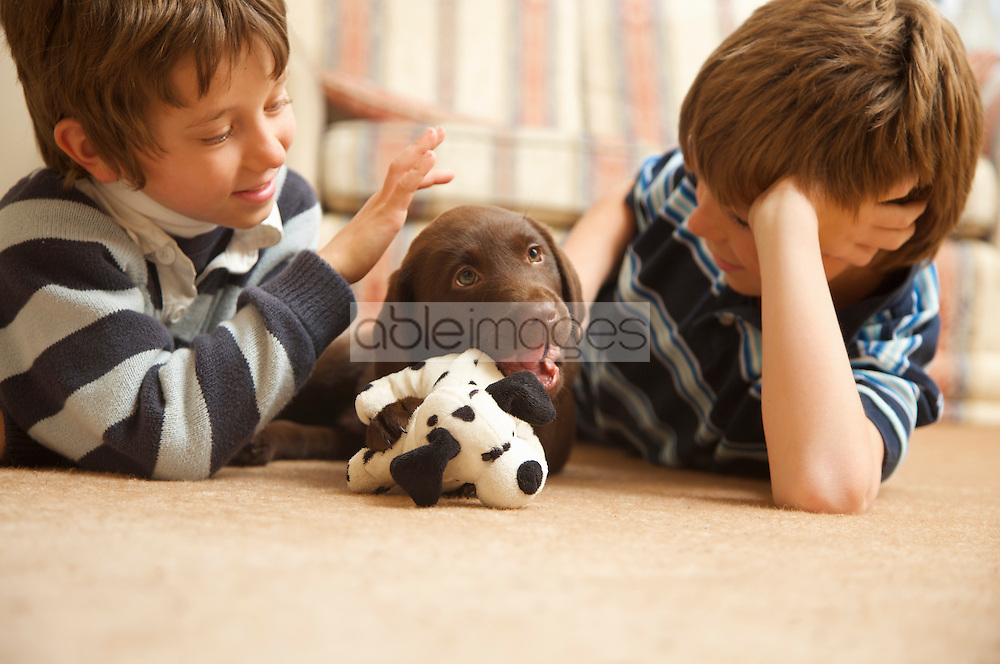 Two boys looking at a chocolate labrador puppy chewing a soft toy
