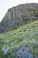Hillside and Andesite cliff columns at The Bend climbing area in Tieton River Canyon, Washington, USA.