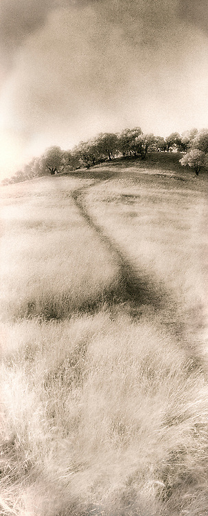 Two paths joining going uphill through grass leading to trees,  China Camp State Park, Northern California, black and white, infra-red, panorama