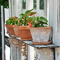 Vintage garden: Terracotta pots planted with begonias displayed on a shelf made from salvaged house corbels and brackets