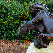 Brookgreen Gardens, in Murrells Inlet, South Carolina, is a sculpture garden and wildlife preserve which includes several themed gardens with American figurative sculptures and trails of nature reserves on the 9,100 acre property.  It was founded by Archer Milton Huntington and his wife Anna Hyatt Huntington to feature sculptures by Anna and her sister Harriet Hyatt along with other American Sculptors.   I was built on a former rice plantation - Brookgreen Plantation.  During the Christmas season many of the sculptures and live oak trees are dressed in brilliant lights.  It is one of the most popular attractions in South Carolina. This is a sculpture of running horses.