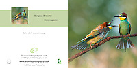 European Bee-eater Merops apiaster Square Greeting Card with Peel and Seal White Envelope