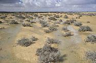 Desert flood - Negev Desert, Israel