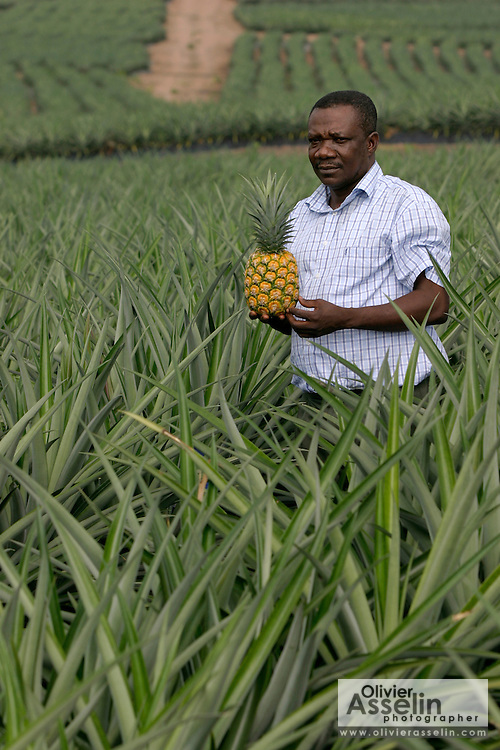 Pineapple producer holding a ripe MD2 variety pineapple while standing in a pineapple field.