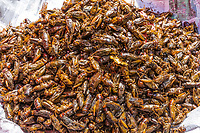 roasted cricket insects local  street food at Yangon (Rangoon) in Myanmar (Burma)
