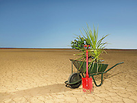 Wheelbarrow full of plants next to spade in desert