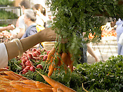 woman selecting a bunch of carrots