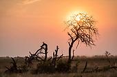 Okavango rest days
