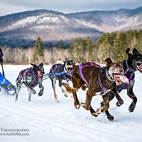 Dog sledding in the mountains of New Hampshire.<br />