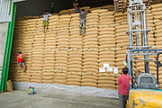 "08 JULY 2014 - WANG NAM SAP, SUPHAN BURI, THAILAND: Warehouse workers climb down a wall of rice sacks while helping the army inspect rice at a rice warehouse in Wang Nam Sap, Suphan Buri province. Representatives of the Thai ruling junta have started inspecting stocks of rice bought by the ousted civilian government following the 2012 and 2013 rice harvests. The government of ousted former Prime Minister Yingluck Shinawatra bought up thousands of tons of rice from farmers at above market prices in one of its most controversial populist policies. The alleged mismanagement of the ""rice pledging scheme,"" as it was called, was one of the factors that lead to the May 2014 coup that ousted the government. According to officials doing the inspections found rotten and weevil-infested grain, along with evidence that large stocks were replaced with old or inferior grades.     PHOTO BY JACK KURTZ"