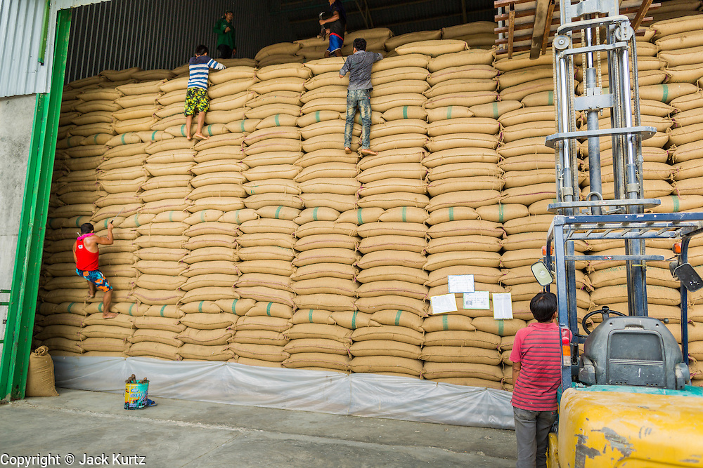 """08 JULY 2014 - WANG NAM SAP, SUPHAN BURI, THAILAND: Warehouse workers climb down a wall of rice sacks while helping the army inspect rice at a rice warehouse in Wang Nam Sap, Suphan Buri province. Representatives of the Thai ruling junta have started inspecting stocks of rice bought by the ousted civilian government following the 2012 and 2013 rice harvests. The government of ousted former Prime Minister Yingluck Shinawatra bought up thousands of tons of rice from farmers at above market prices in one of its most controversial populist policies. The alleged mismanagement of the """"rice pledging scheme,"""" as it was called, was one of the factors that lead to the May 2014 coup that ousted the government. According to officials doing the inspections found rotten and weevil-infested grain, along with evidence that large stocks were replaced with old or inferior grades.     PHOTO BY JACK KURTZ"""