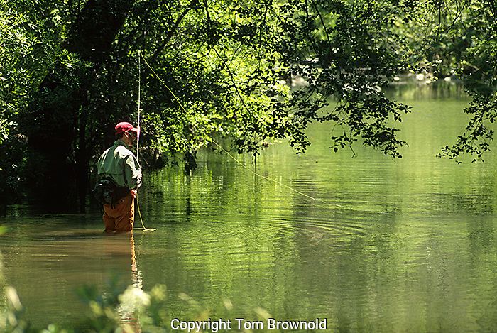 fly fishing in West clear creek