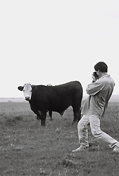 man photographing cow in field
